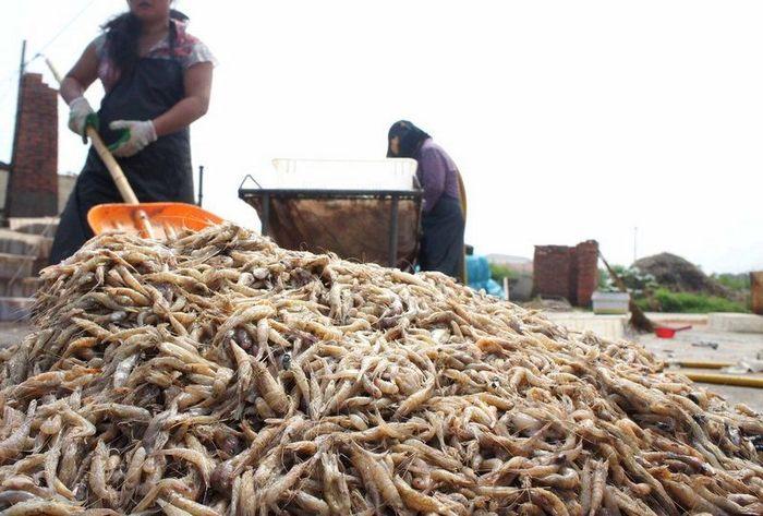 Поддельные китайские креветки (10 фото)