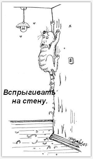 Обязанности кошки в доме (17 фото)