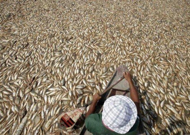 Сезонная засуха в тропиках (16 фото)