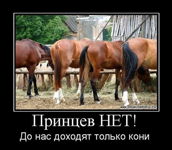 Демотиватор жди принца на белом коне