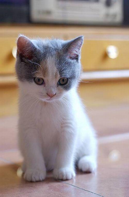 яркоокрашенные распечатать фотографии котят вопросы всю неделю