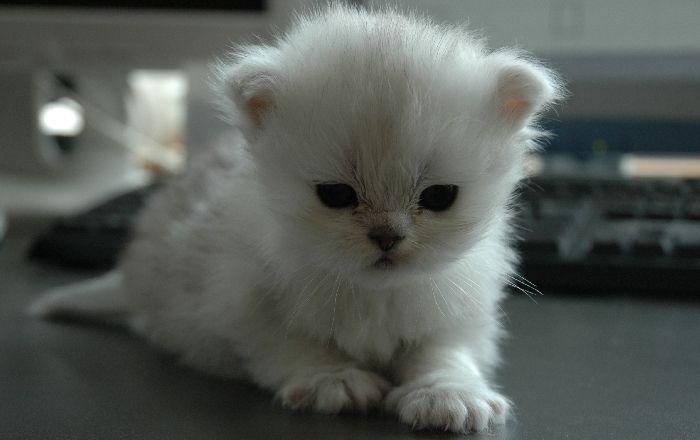 распечатать фотографии котят продажа торт майнкрафт