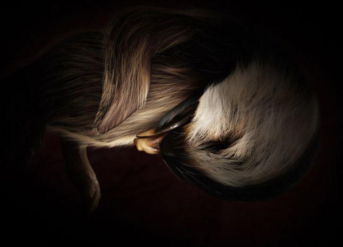 Интересные фотографии Животных в матке (14 фото)