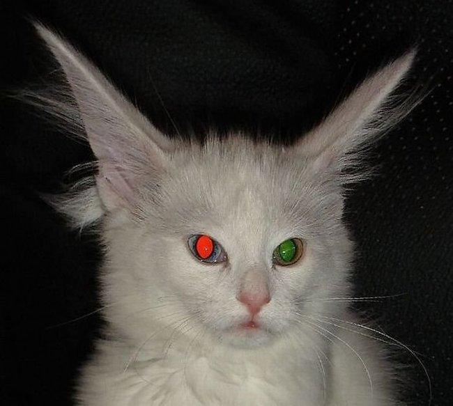 Животные с разными глазами (12 фото)