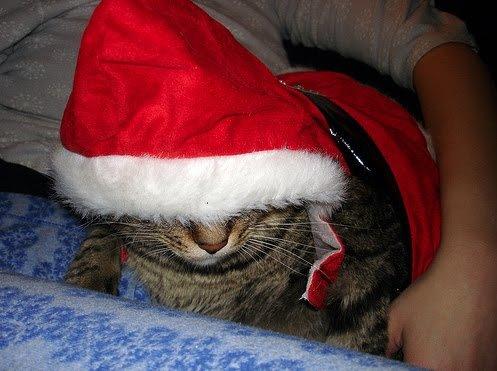 Feliz navidad animal.