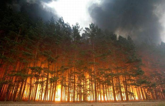 Лесной пожар - Долгинино, Россия (август 2010)