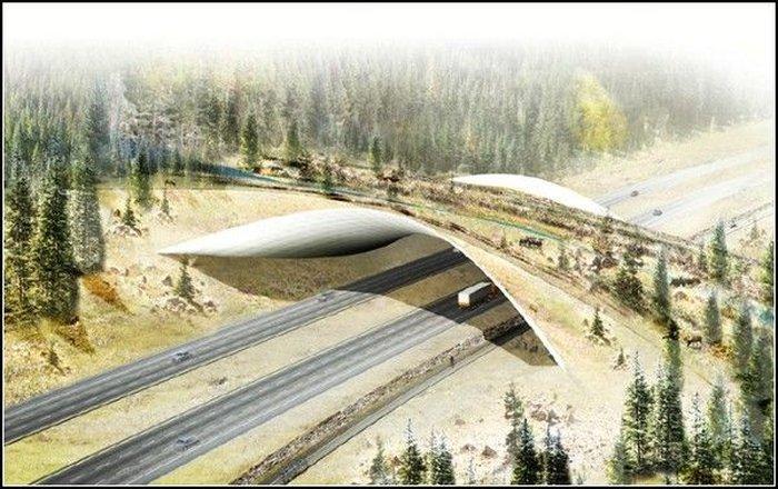 Берегись автомобиля. Мост для животных  (6 фото)