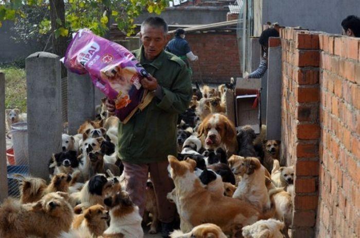 1500 собак и 200 котов (15 фото)