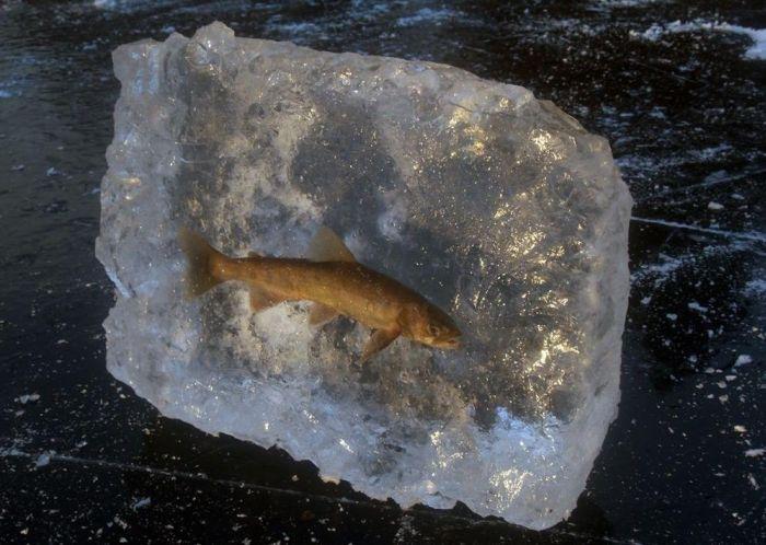 Необычная зимняя рыбалка (2 фото)