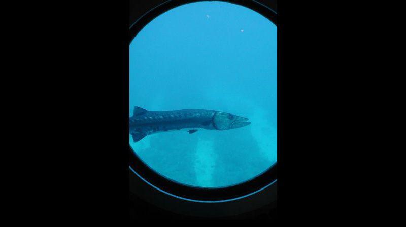 Из лаборатории открываются удивительные подводные виды. К примеру, в иллюминатор может заглянуть желтая рыба-клоун, в то время как поблизости охотится зубастая барракуда. «Мы будто находимся в аквариуме наоборот – воздушном пузыре с окнами» – говорит Сол Россер, глава лаборатории.