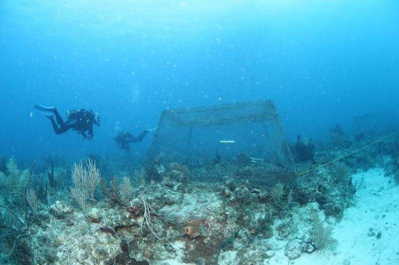 Команда доктора Хэя соорудила большие подводные клетки, подобные этой в центре снимка, для того, чтобы запустить туда различные виды травоядных подводных обитателей. «Очень важно не просто разводить травоядных на рифе, но и соблюдать их верное соотношение. Если не будет хотя бы одного вида, все быстро полетит в тартарары», - рассказывает доктор Хэй.