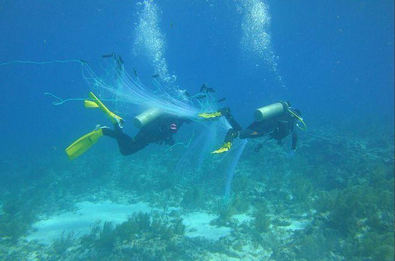 Исследователи расставляют сети, чтобы поймать рыб для своих экспериментов. Доктор Хэй и его коллеги ловят рыб-попугаев и рыб-хирургов, которых помещают в клетки.