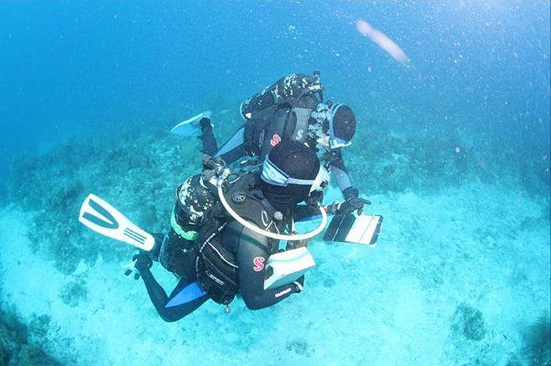 В течение следующих 10 месяцев, ученые планируют каждые 6 недель проверять состояние здоровья коралла внутри клеток с разными видами рыб. «Манипулируя несколькими основными видами рыб, мы сможем помочь рифу выжить», – говорит доктор Хэй.