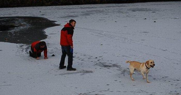 Хозяйка собаки чуть не погибла, спасая своего пса (4 фото)
