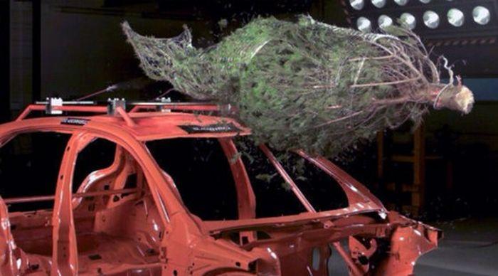 Правила перевозки новогодней елки от агентства ADAC (видео+текст)