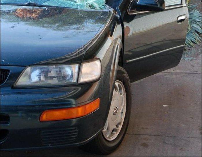 Автомобиль придавило пальмой (4 фото)