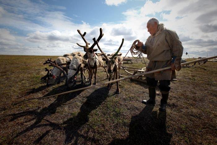 Оленеводы русского Севера (41 фото)