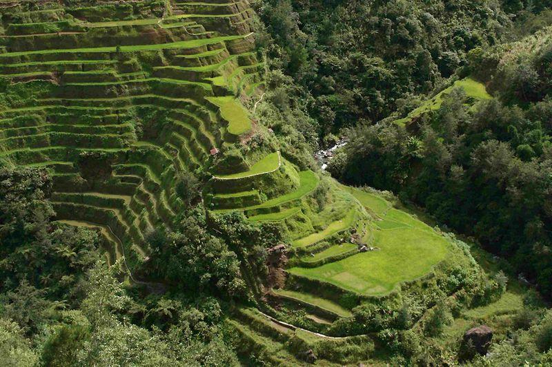 2. Рисовые террасы Банауэ<br>На территории более 4000 кв.миль на высоте 1524 метров над уровнем моря в горах Ифуаго в Филиппинах вы найдете то, что местные жители называют «восьмым чудом света»: вырезанные вручную террасы, на который рис растет уже 2000 лет. Древние люди проделывали эту работу не одно поколение, и террасы орошаются водой с тропических лесов над ними. Люди поддерживают их и по сей день. Считается, что если эти террасы выстроить друг за другом, в результате получится линия, которой можно обогнуть весь мир. Поистине чудо света. (McCouch S)
