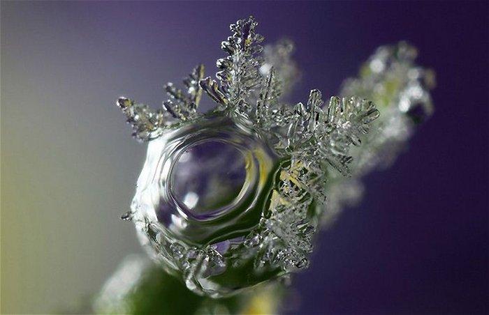 Мир снежинок и инея в макрообъективе Брайана Валентайна (14 фото)