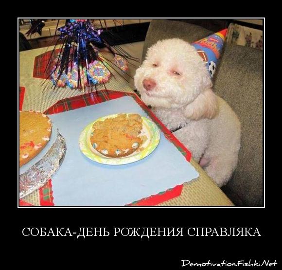 Собака-день рождения справляка