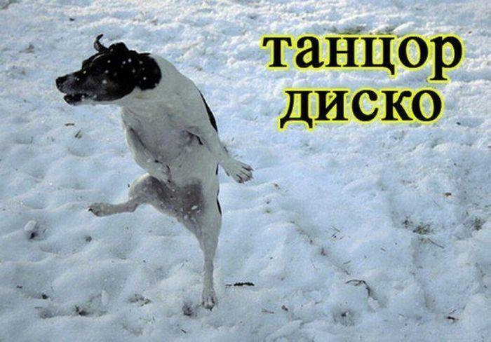 Сравнение собак с людьми (33 фото)