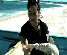 Акулу - цыклопа засняли на видео