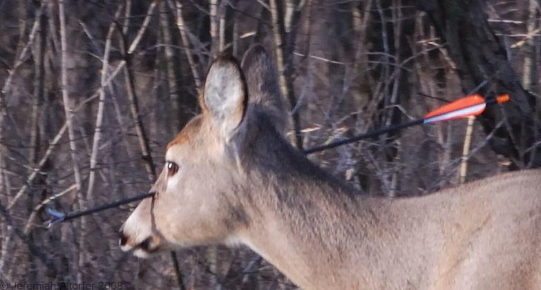 Олень со стрелой в голове (9 фото)