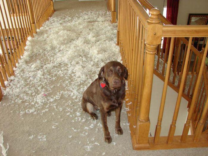Собаки и их выходки (25 фото)