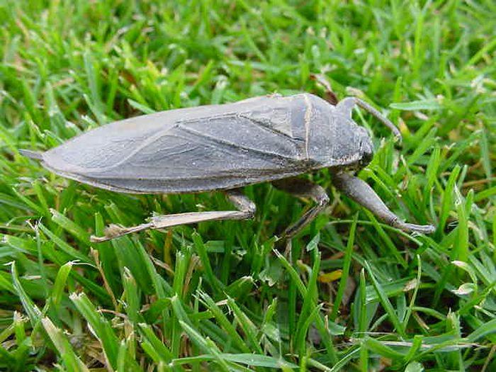 Гигантские насекомые со всего мира (47 фото)