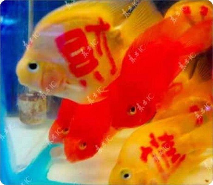 Татуированные рыбы (11 фото)