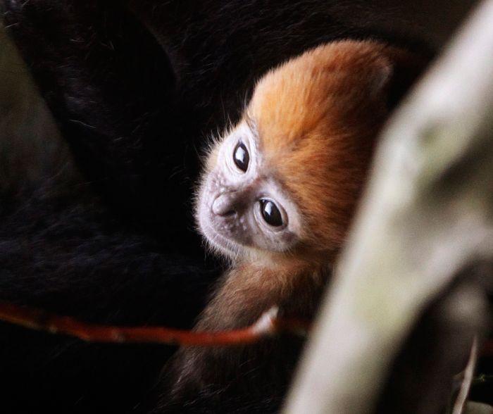 Лучшие фотографии дикой природы за 2011 года (50 фото)