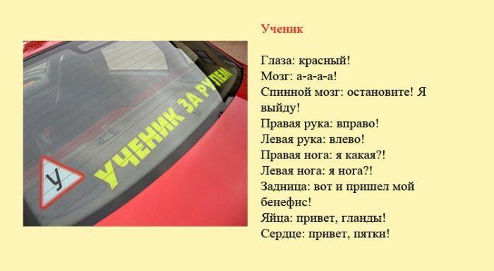 Разновидности водителей и их поведение на дороге (8 фото)