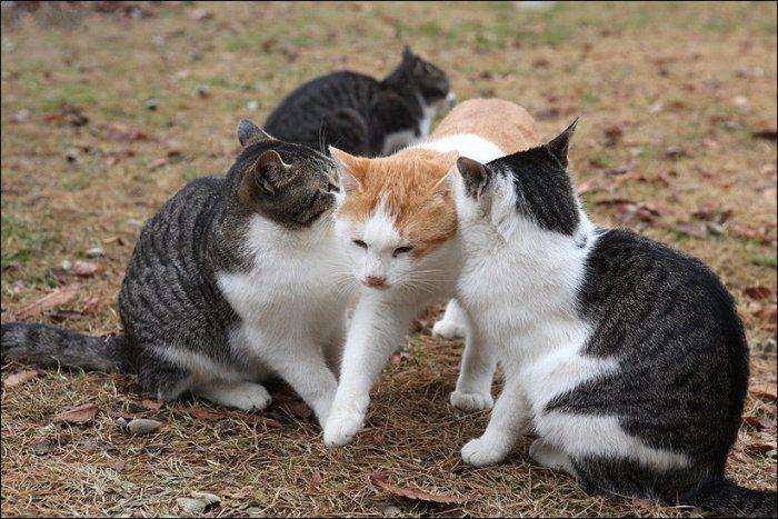 является картинки ревнивая кошка выполнен пластиковых панелей