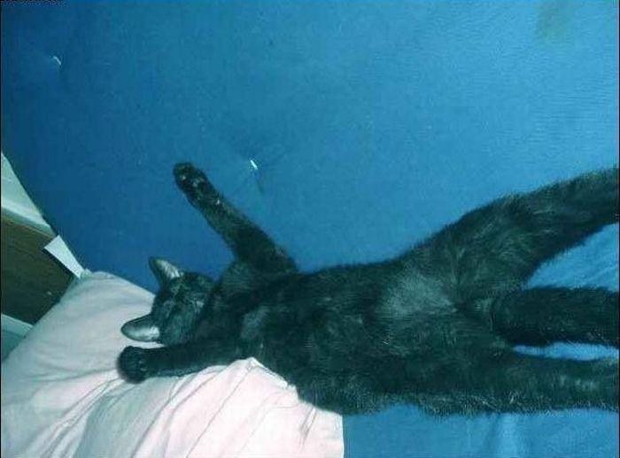 Очень ленивый кот (4 фото)