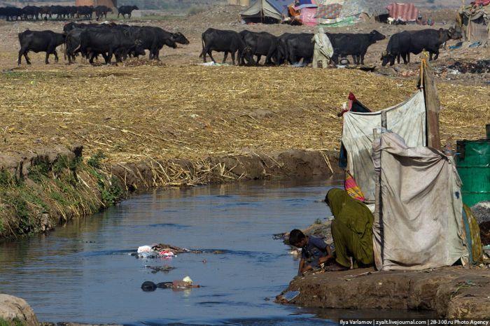 Мясовары (40 фото)