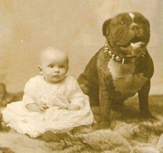 питбуль, собака, собака-нянька
