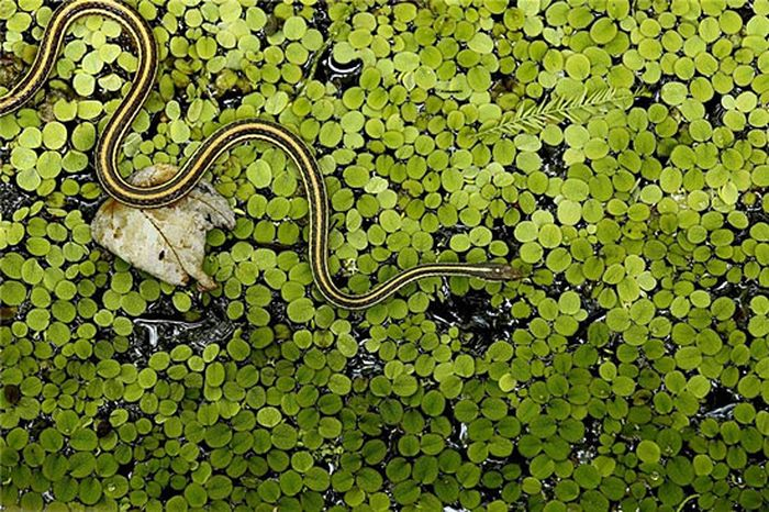 животные, насекомые, клещ, змея, лягушка, мышь