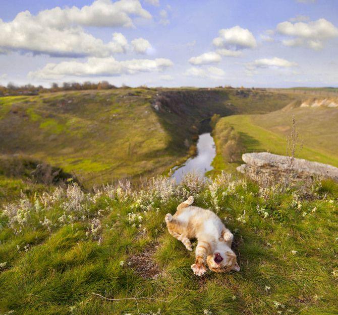 Бесплатный фотоприкол весна, кот, пейзаж