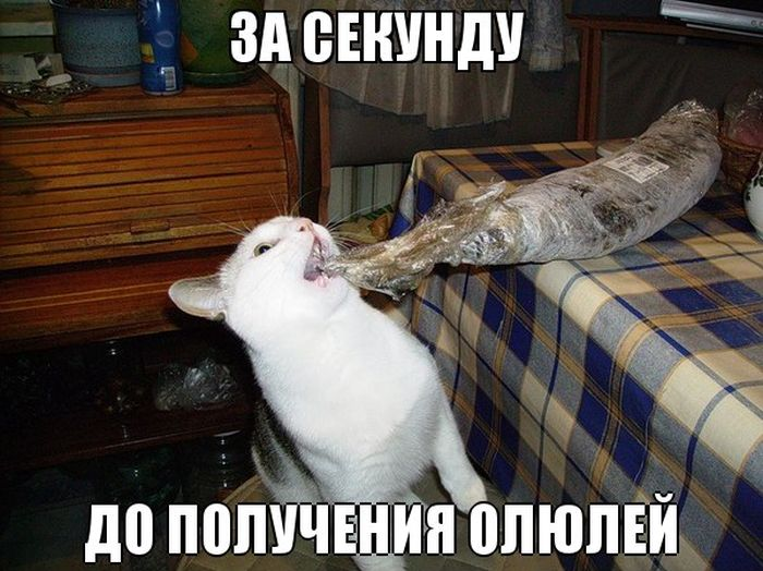 Бугагашеньки кот, рыба, стащил