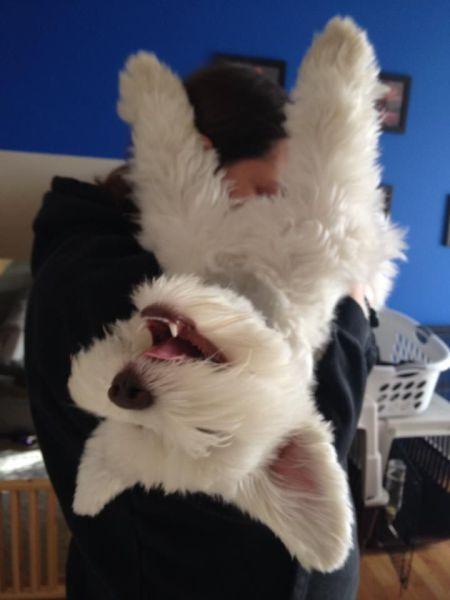 Шикарное фото собака, улыбка