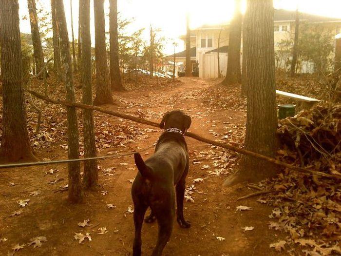 Юмор дерево, прикол, собака