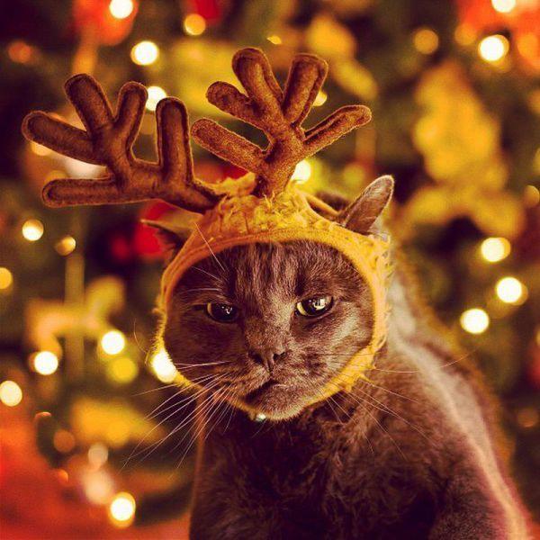 Шикарное фото кот, олень, прикол, шапочка