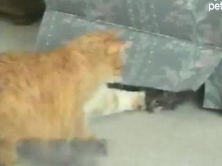Котейки играют