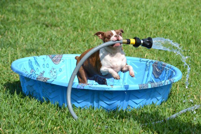 Фотоприкол онлайн бесплатно собака, шланг