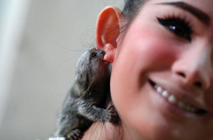 Фотоподборка девушка, обезьянка