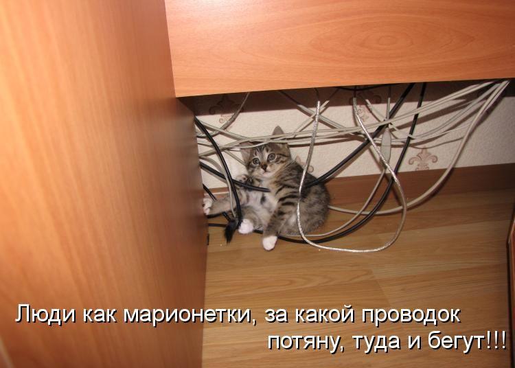 Картинки про котов смешные с надписями грыз провода, дню