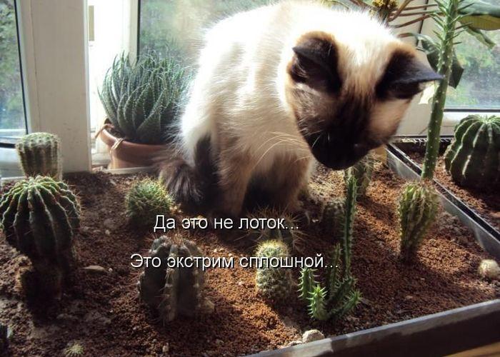 котоматрица, кот, кошка, прикольные надписи