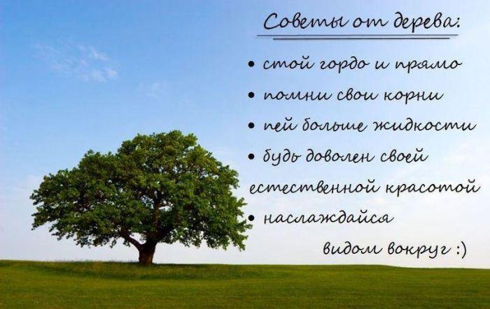 Фотоальбом дерево, полезные советы, советы