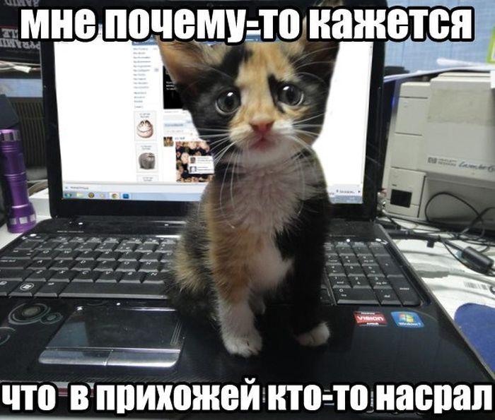 Улетное фото котенок, милаха, нагадил, невинное