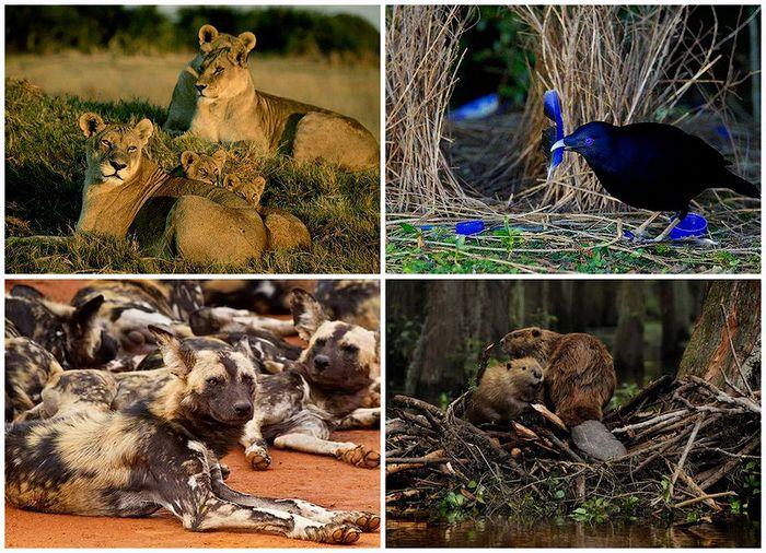 работа, труд, животные, дикая природа